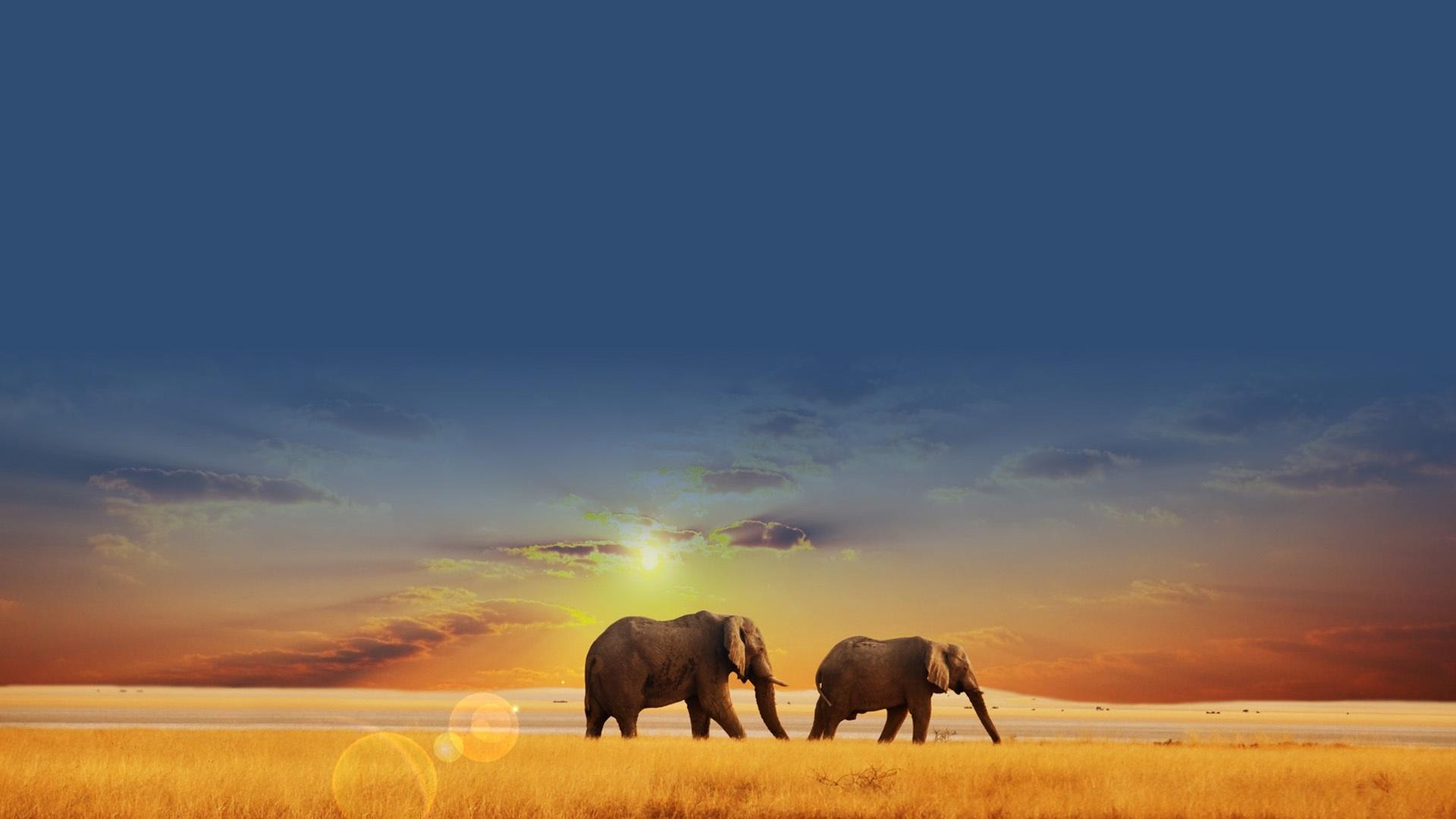 非洲大象草原風景桌面壁紙