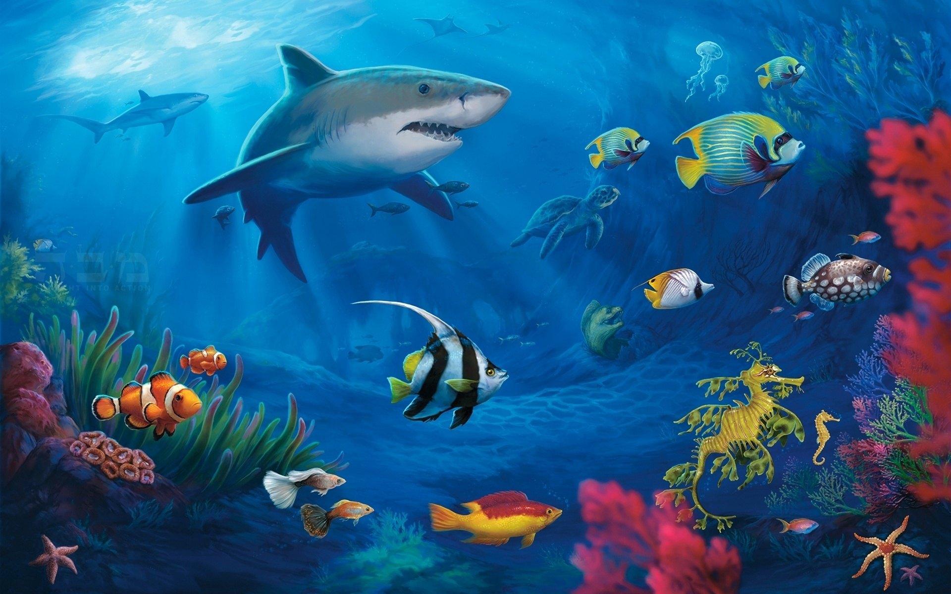 高清動態桌面壁紙海底世界
