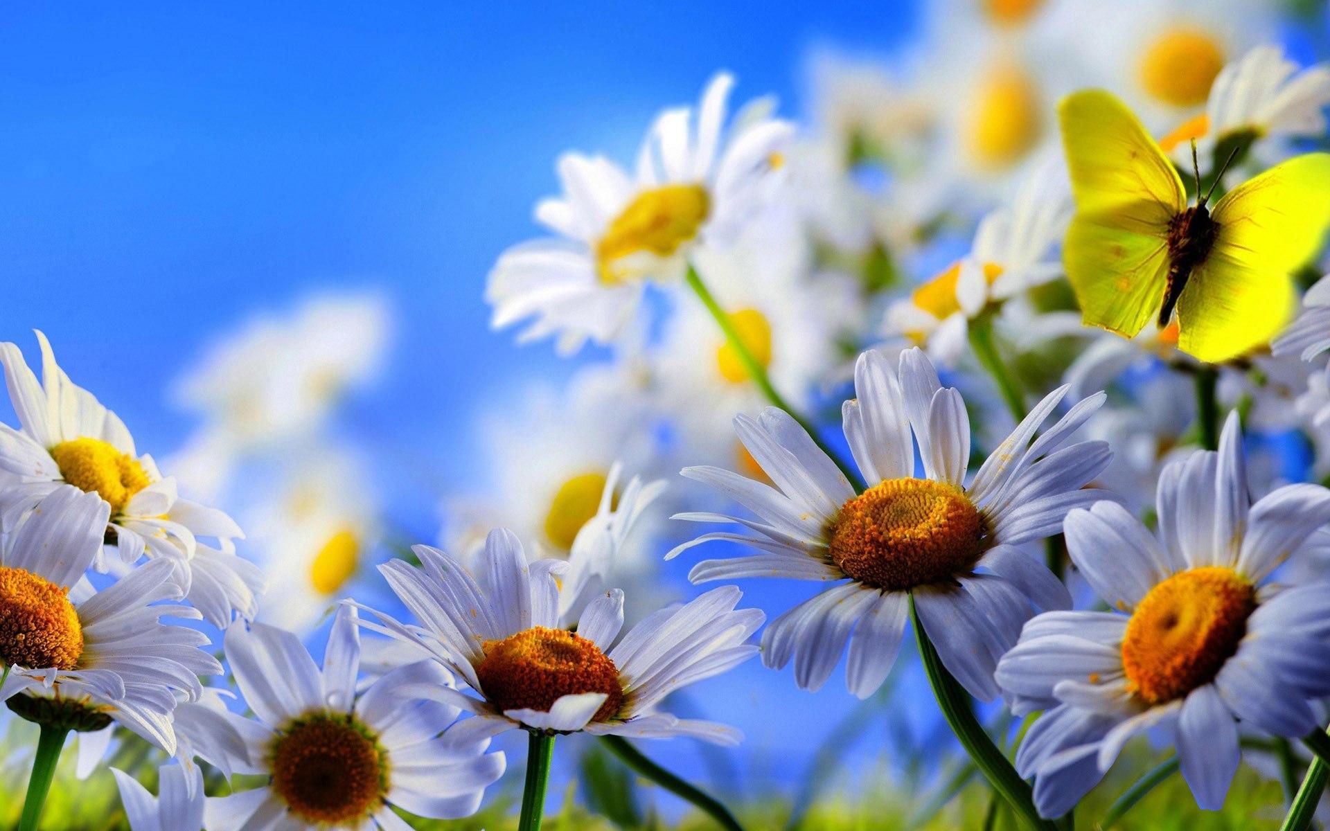 好看的动态花朵图片_好看的电脑桌面壁纸_高清壁纸下载-壁纸图片大全