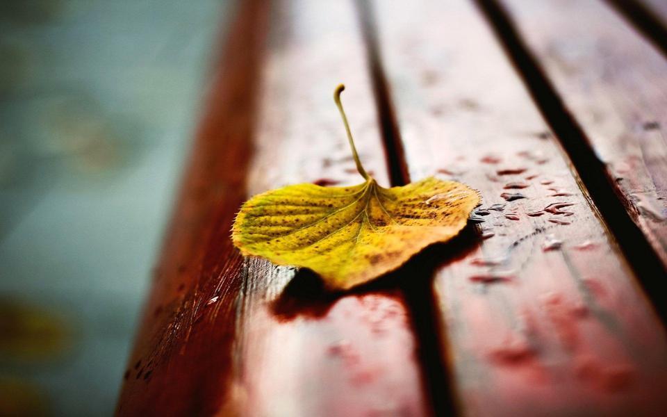 躺椅上的一片秋叶静美图片高清唯美壁纸