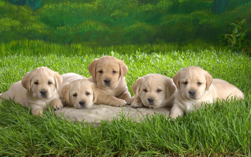 可爱狗狗桌面壁纸-电脑桌面壁纸_壁纸大全