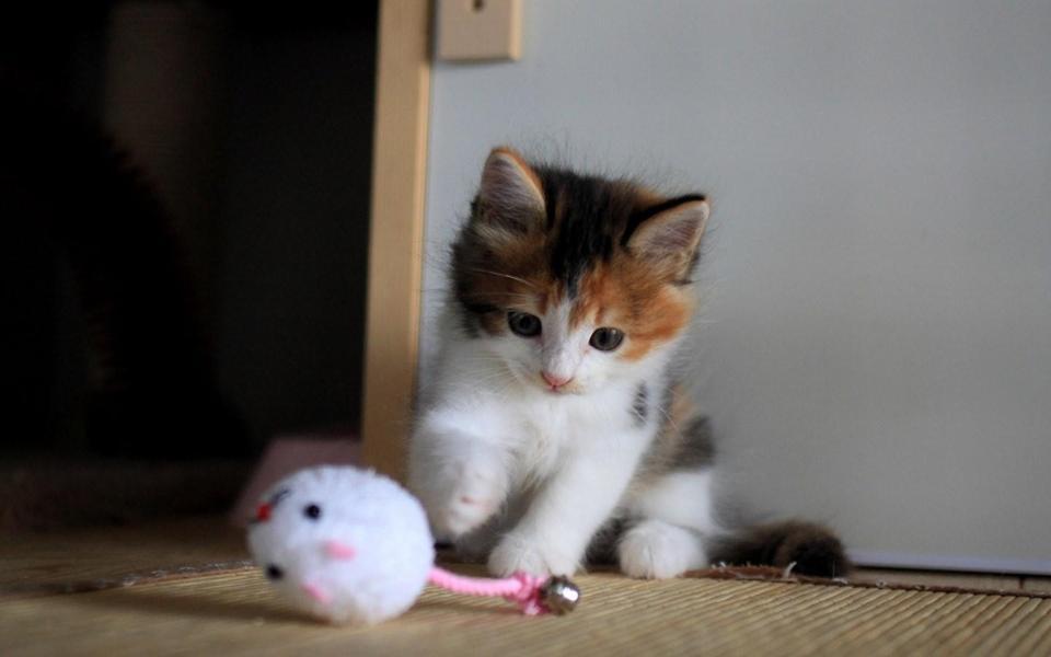 可爱的小猫动态壁纸