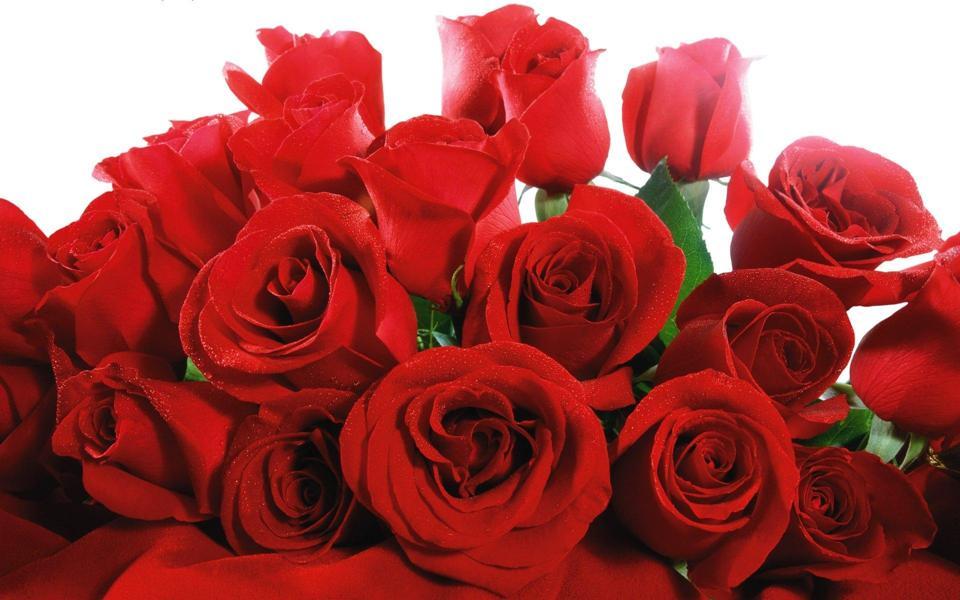 红玫瑰电脑桌面壁纸高清下载图片