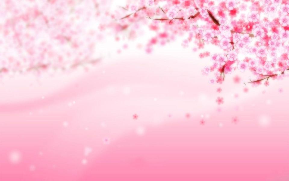 粉色梅花桌面背景图片-电脑桌面壁纸_壁纸大全