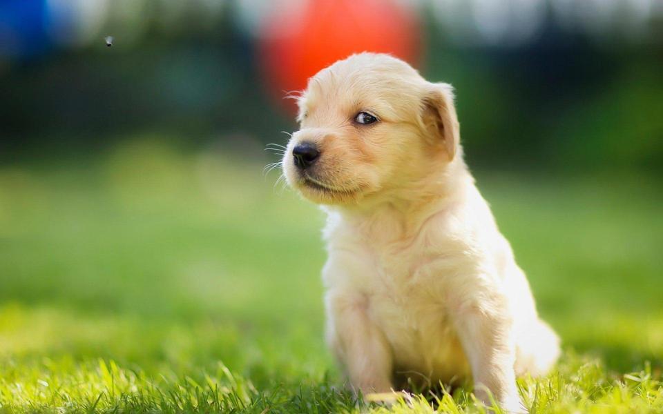 超可爱的狗狗桌面壁纸http www bizhi360 com keai 4421 html