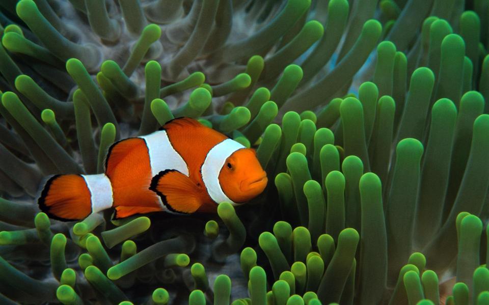 海底漂亮的热带鱼壁纸-电脑桌面壁纸_壁纸大全