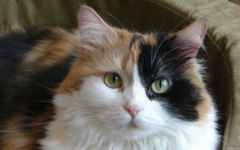 卖萌可爱猫咪高清图片大全 宽屏电脑桌面壁纸 下