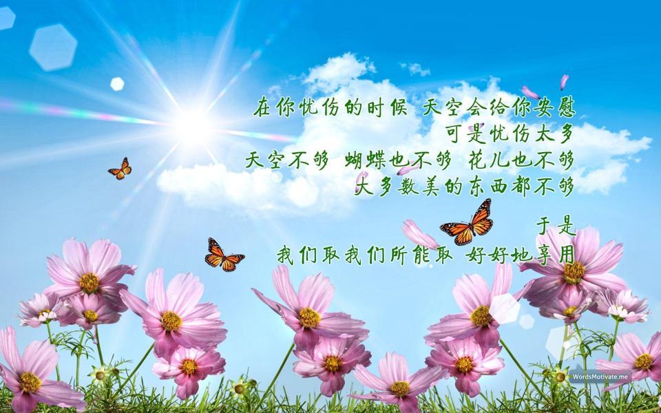 蓝天花朵正能量电脑壁纸高清下载