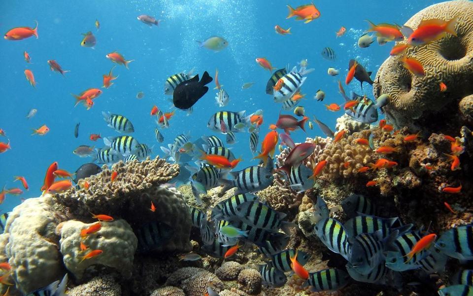 电脑背景海底世界_漂亮的海底世界桌面壁纸-电脑 .