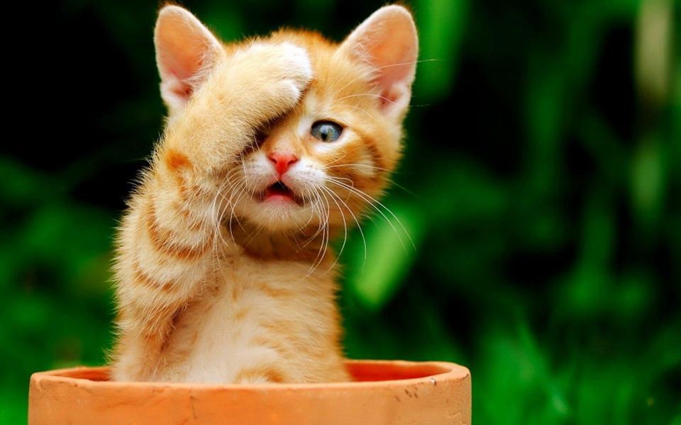 好看的萌猫咪可爱桌面壁纸