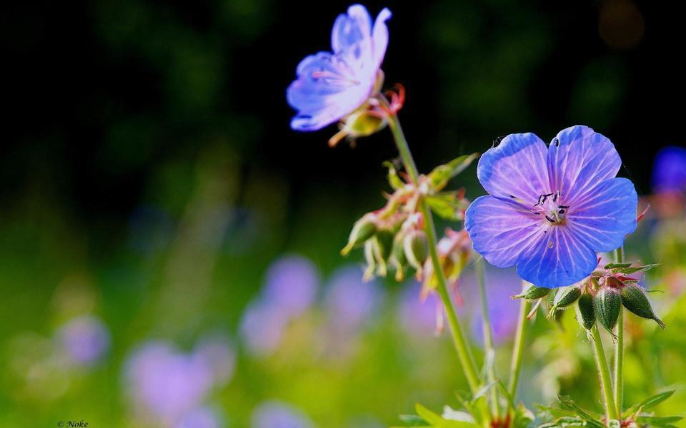 野外高清唯美花朵桌面壁纸