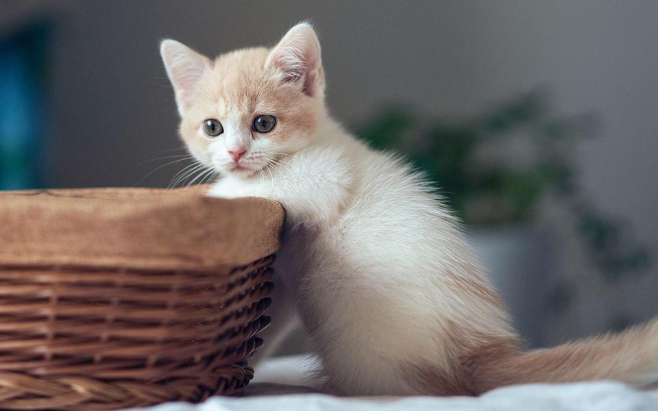 可爱美女壁纸高清_高清小萌猫桌面壁纸-电脑桌面 .