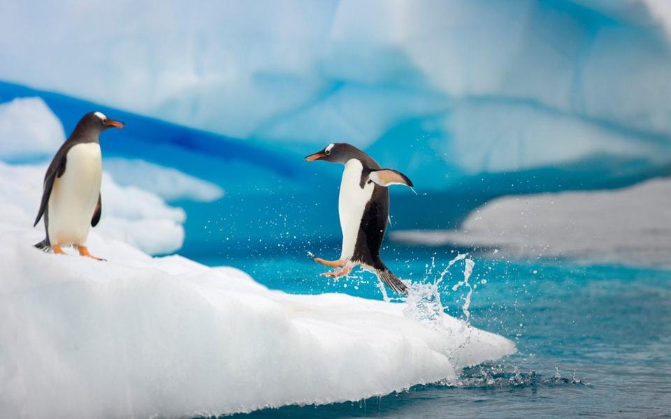 可爱南极企鹅桌面壁纸-电脑桌面壁纸_壁纸大全