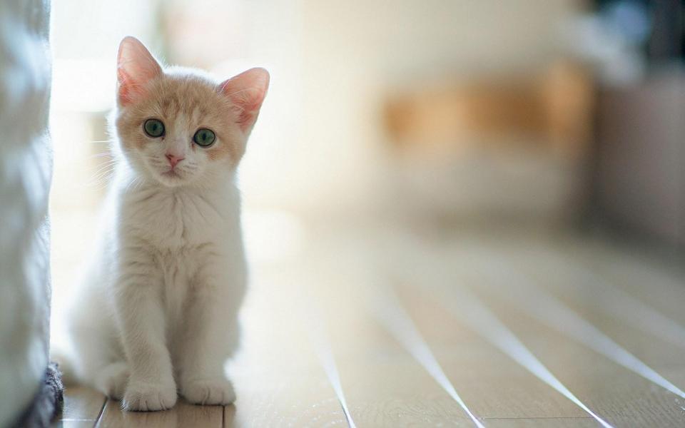猫可爱卖萌表情_可爱卡通小猫简笔画