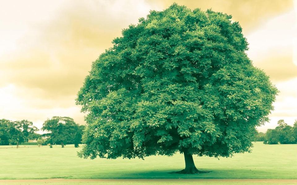 一棵大树高清壁纸-电脑桌面壁纸_壁纸大全