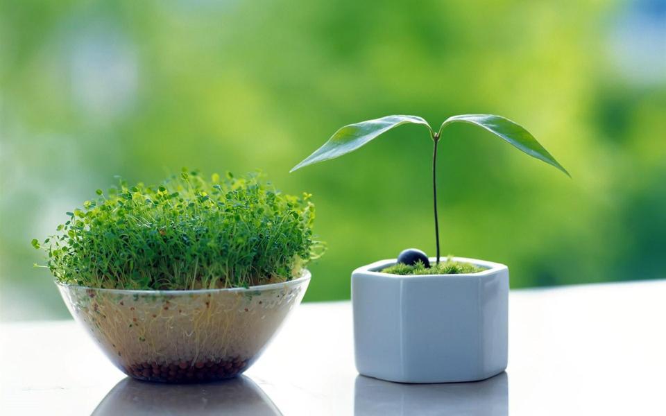 绿色养眼植物桌面背景-电脑桌面壁纸_壁纸大全