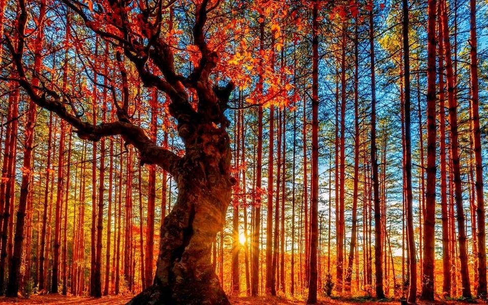 秋季森林黄昏唯美风景桌面壁纸