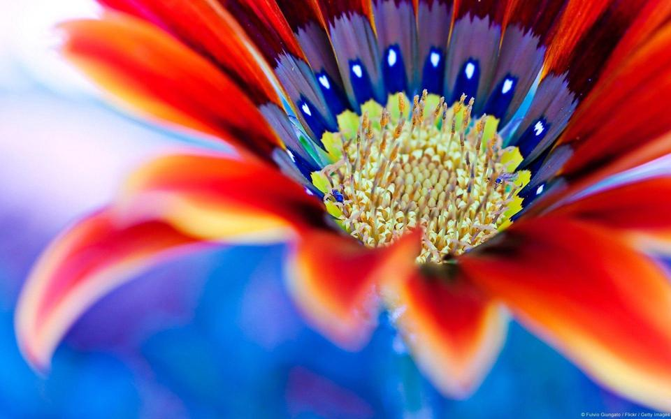 蓝色小清新花朵高清桌面壁纸