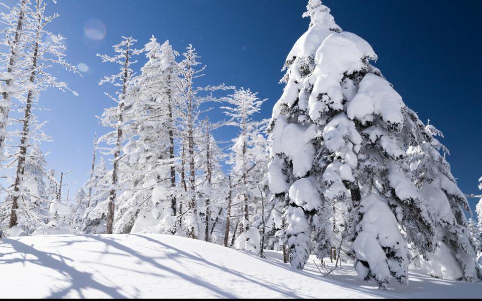 冬天大雪覆盖的树林风景壁纸