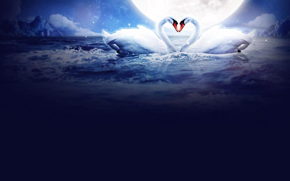 浪漫白天鹅唯美桌面背景