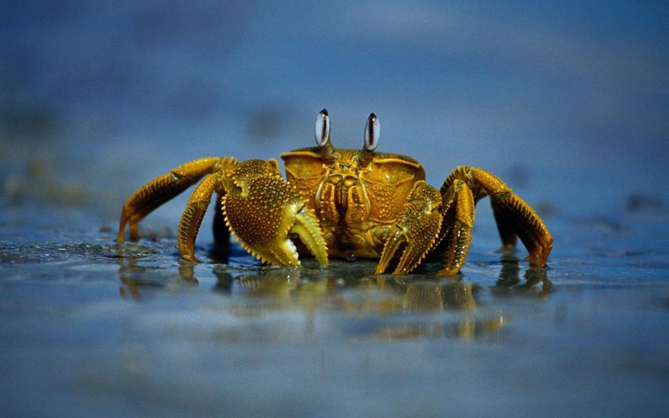 沙滩上的螃蟹高清壁纸