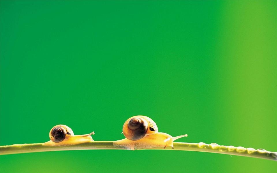 绿色护眼背景蜗牛高清壁纸-电脑桌面壁纸
