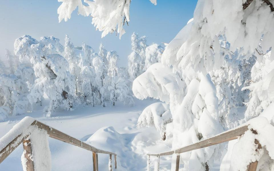 冰雪覆盖的冬天风景桌面壁纸