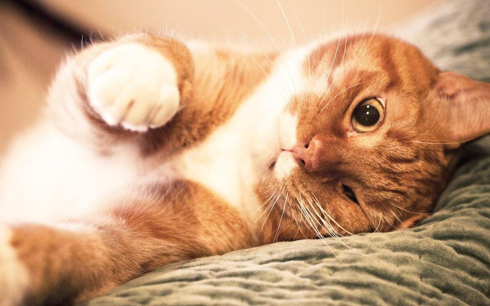 可爱小猫高清桌面壁纸高清