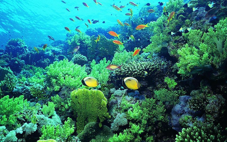 高清海底世界鱼动态壁纸图片-电脑桌面壁纸