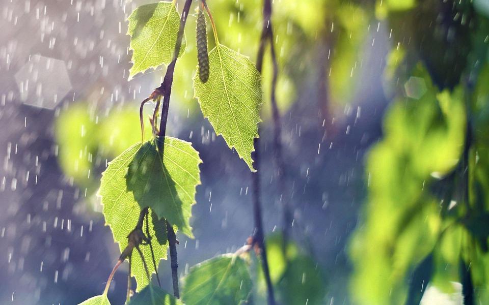 夏日雨中的树叶小清新电脑壁纸