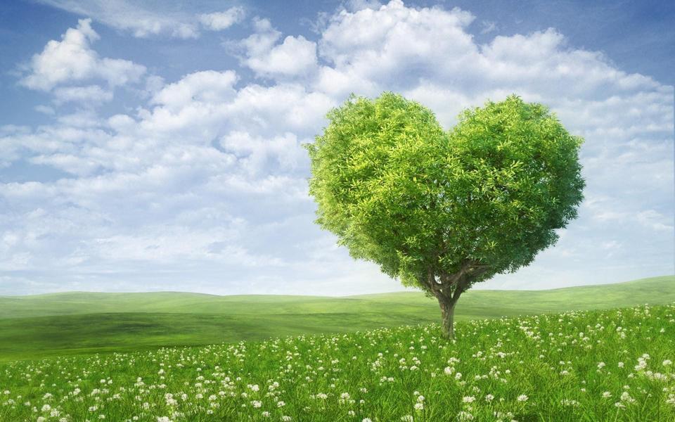 的爱心树绿色风景桌面壁纸-电脑桌面壁纸_壁纸大全