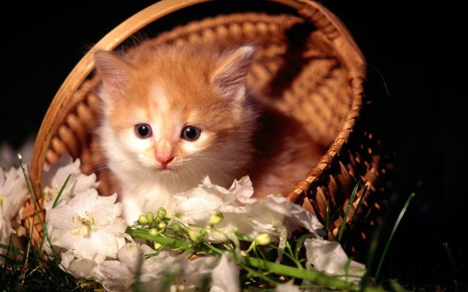 可爱的猫咪桌面壁纸高清下载