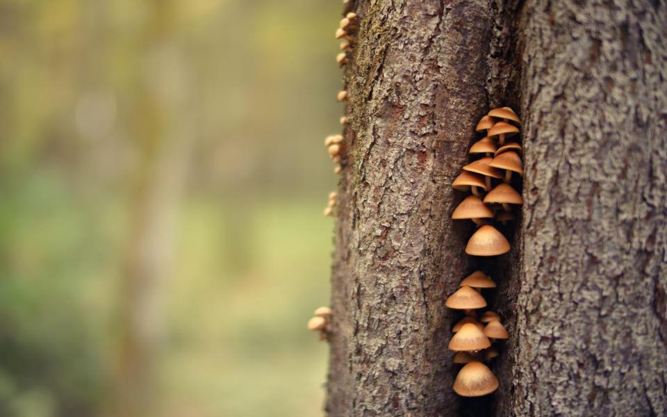 可爱蘑菇素材图片大全