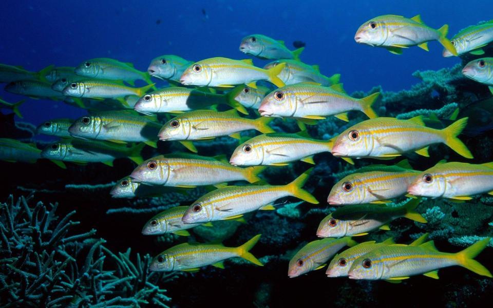 海底世界鱼群动态桌面壁纸-电脑桌面壁纸