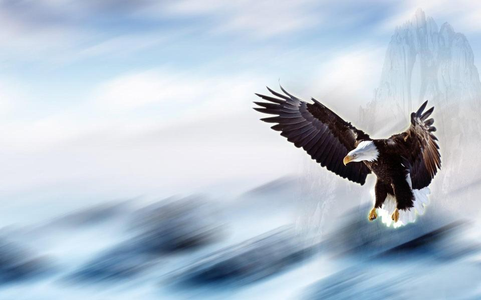 翱翔的雄鹰桌面背景壁纸