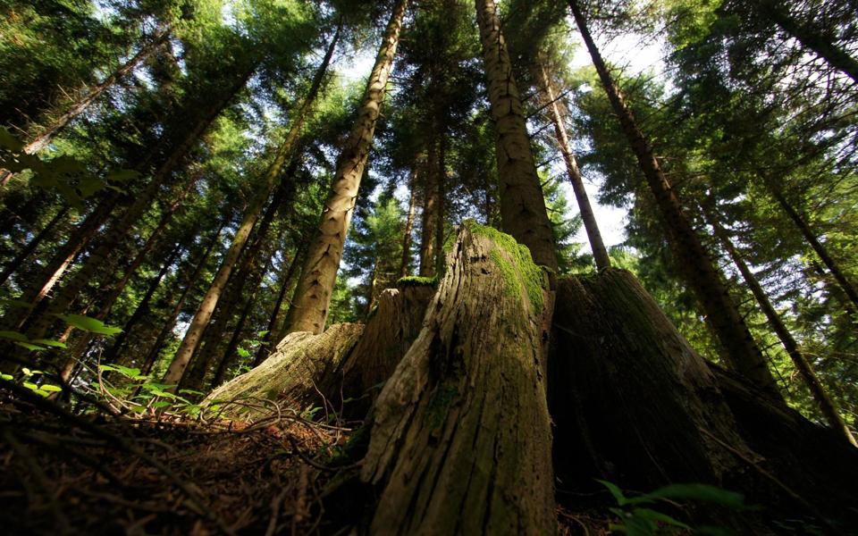 高清绿色森林自然风景桌面壁纸-电脑桌面壁纸_壁纸 .