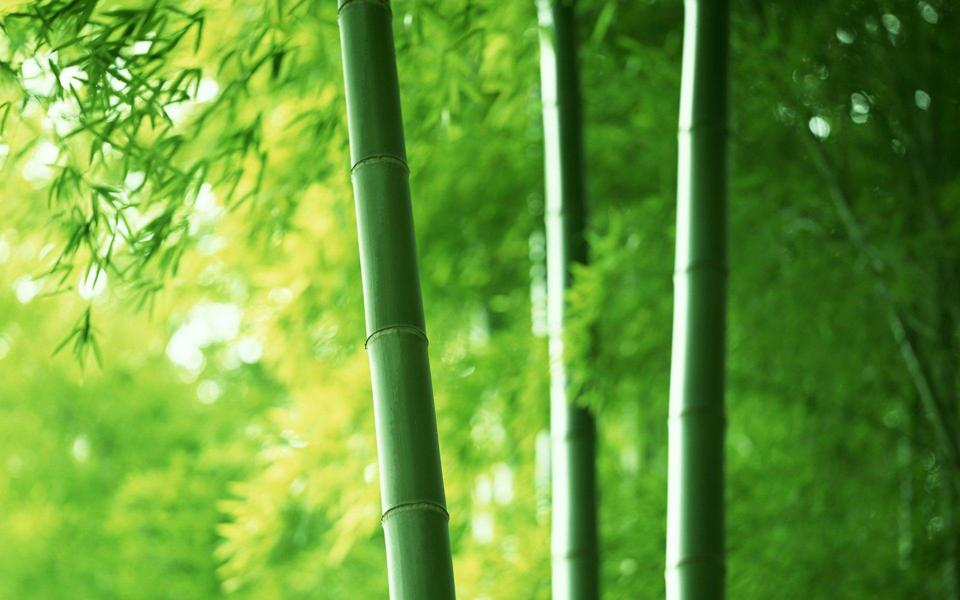 綠色護眼竹林高清壁紙大全-電腦桌面壁紙
