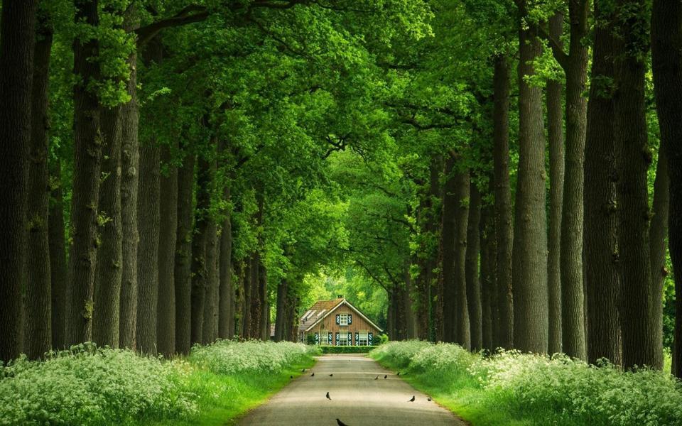 绿色公园小道自然风景护眼桌面壁纸