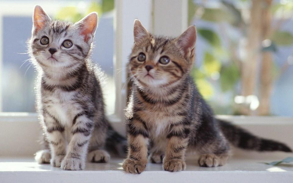 两只小猫咪壁纸图片-电脑桌面壁纸_壁纸大全