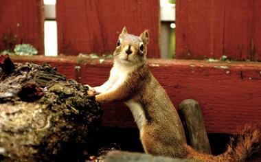 可爱花栗鼠动物壁纸