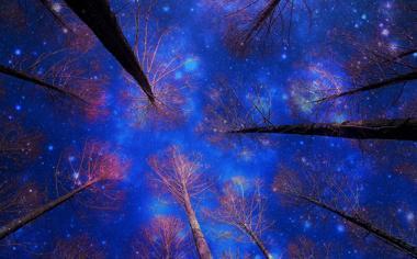 冬天树林夜晚唯美桌面壁纸