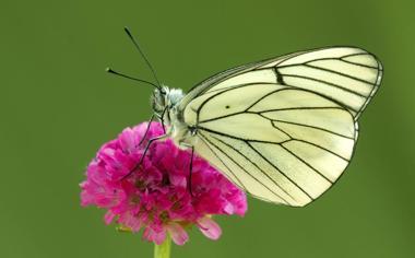 高清花朵上的蝴蝶桌面壁纸