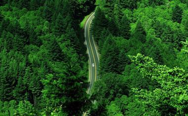 绿色森林公路风景桌面壁纸
