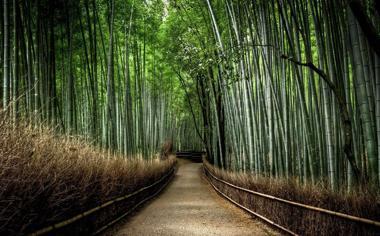 好看竹林风景桌面壁纸