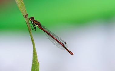 绿色背景美丽的蜻蜓桌面壁纸