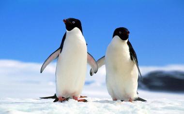南极企鹅桌面壁纸