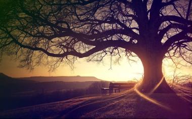 秋天黄昏大树唯美桌面壁纸