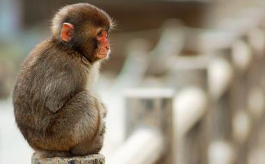 可爱的猴子高清壁纸