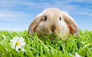 草丛中可爱的兔子高清动物壁纸