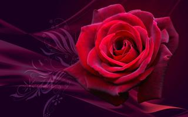 电脑桌面壁纸红玫瑰高清大图下载